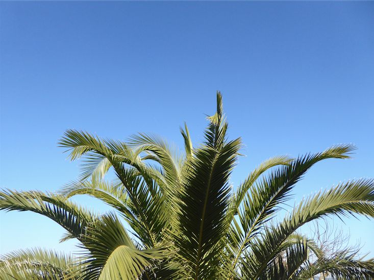 Palm trees and blue skies in Ericeira