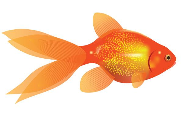 How to Create a Vector Goldfish in Six Steps   Vectortuts+