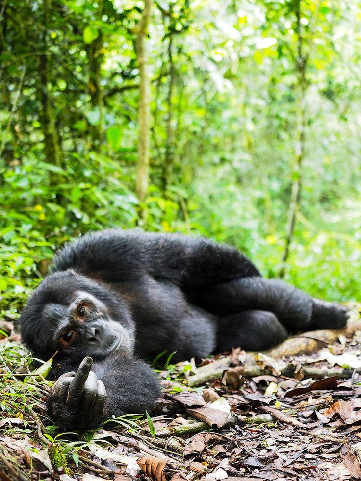 fotos de animales muy divertidas mis gafas de pasta orangutan