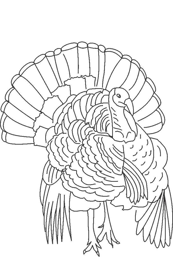 82 best Turkeys images on Pinterest
