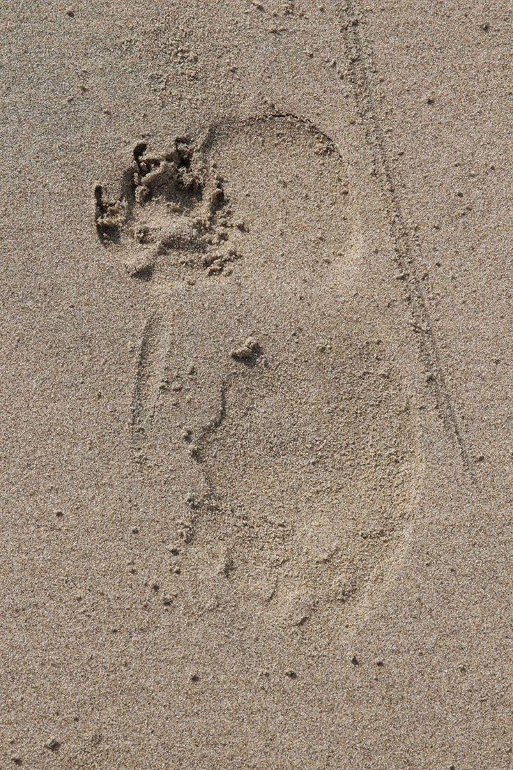 paw print and footstep in sand
