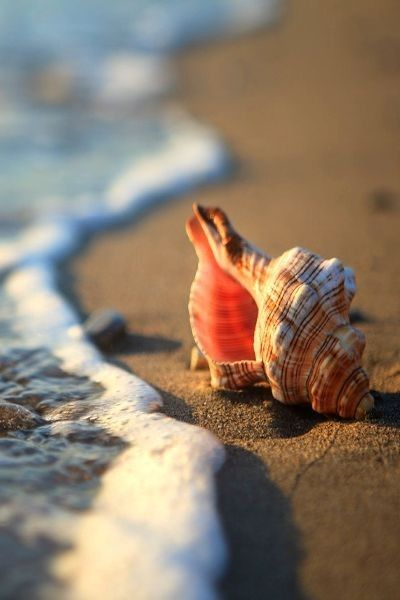 Beach photography using  a shell  by the ocean water