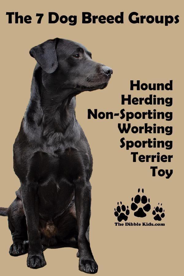 7 Dog Breed Groups Characteristics Of Each Dog Psychology Dog