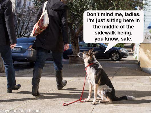 how to teach a dog place