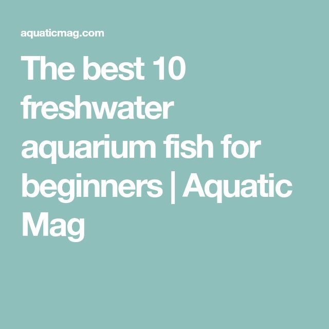 The best 10 freshwater aquarium fish for beginners | Aquatic Mag