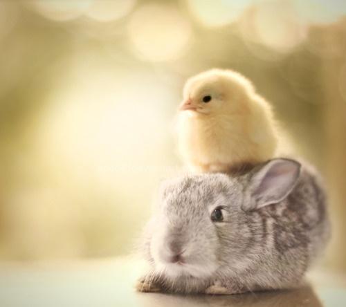 Springtime Bunny & Chick
