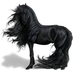 Pferd Araber Dunkelfuchs