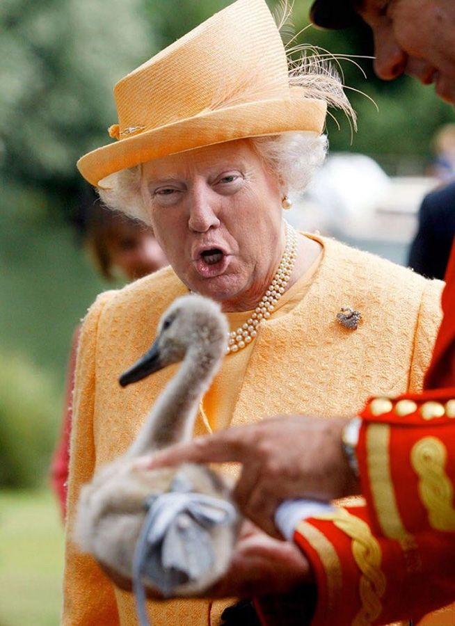 Своими, смешные картинки великобритания