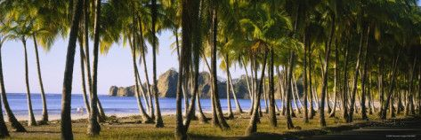 Palm Trees on the Beach, Carrillo Beach, Nicoya Peninsula, Guanacaste Province, Costa Rica Photographic Print by Panoramic Images at AllPosters.com