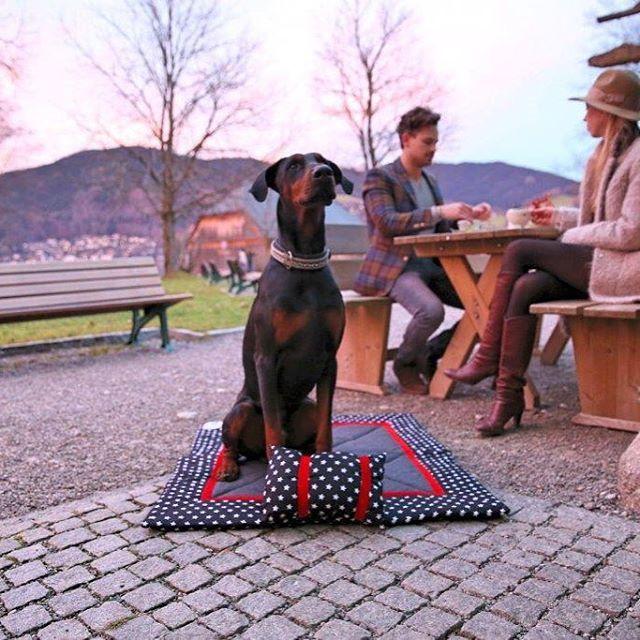 Seid Ihr mit Eurem vierbeinigen Freund oft in Parks, Biergärten oder am See unterwegs? Unsere Hundedecken von myLumpi  sind nicht nur für Daheim sondern auch Outdoor ein stylisches Accessoire. #dobermann #hund #hunde #welpe #welpen #hundedecke #hundebett #liegedecke #design #style #hundeaccessoire #homedesign #outdoor #mylumpi https://www.instagram.com/p/-WMVMCkO2d/