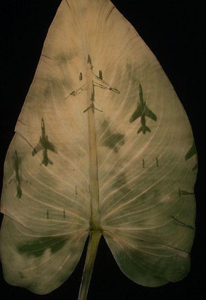 Binh Danh, chlorophyll printed photographs