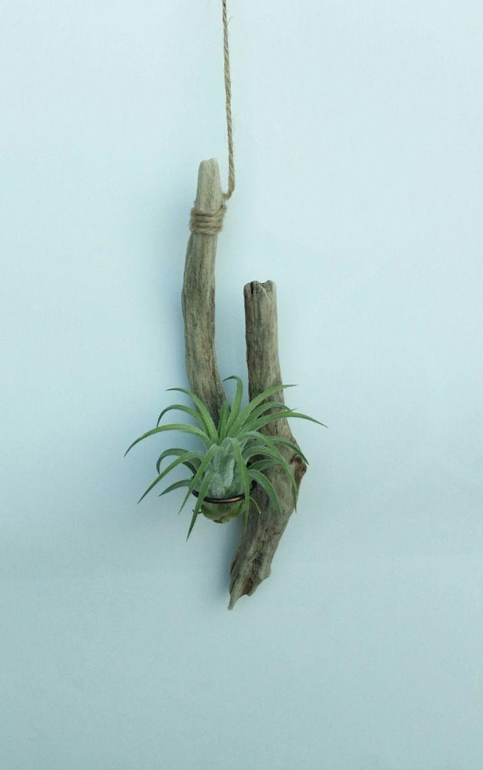 #식목일 #바다나무 #바다보석 #유목 #자연보호 #핸드메이드 #수공예 #디자인소품 #아이디어스