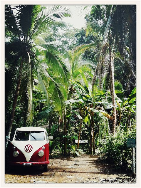 This is Costa Rica but it sure reminds me of Hawaii. parking @ echo books by drewdomkus, via Flickr