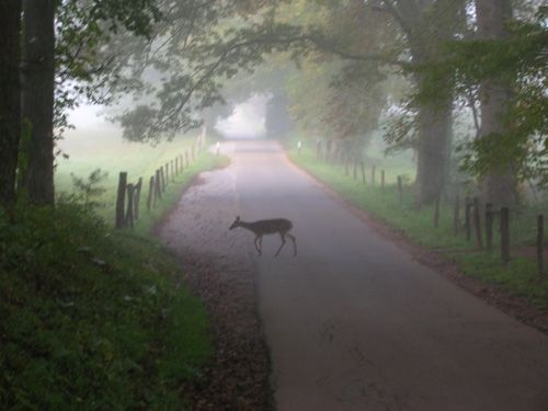 Cades Cove inside the Great Smokey Mountains. A hidden gem for sure!! Cant beat a day in the cove. amanda416: The Cove, Great Smoky Mountain, Favorite Places, Cove Inside, Cades Cove Tenness, Tennessee, Smokey Mountain, Gatlinburg Tn, Cades S Cove