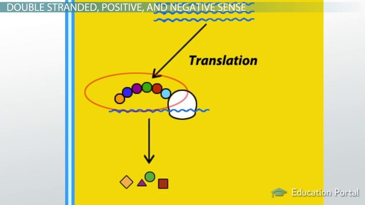 Replication of RNA Viruses - Positive and negative sense RNA viral replication