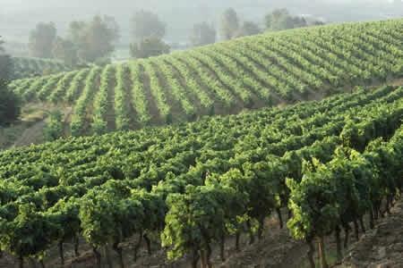 Swan Valley Wine Tour / Western Australia with Tara / nick 30 mins away.