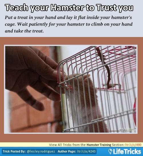 Hamster Training - Teach your Hamster to Trust You just don't feed through the cage, it'll lead to nipping if you put your fingers near the cage.