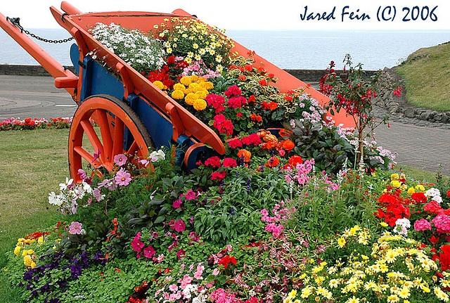 182 best northern ireland images on pinterest belfast for Garden design ideas northern ireland