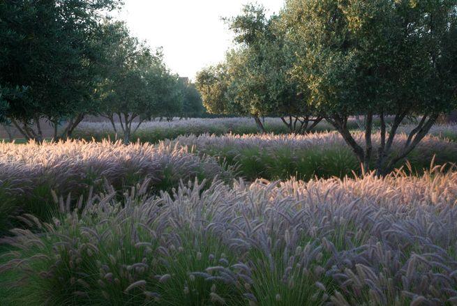 n a garden in Morocco. Designed by Chelsea gold award winner, Luciano Giubbilei.