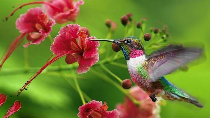 Бог мудрости. Птицы небесные | Обои с птицами, Колибри, Птицы