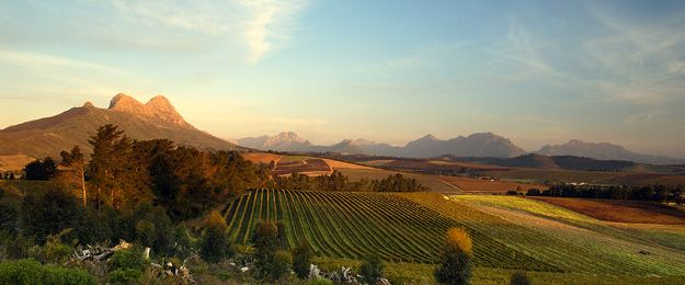 10 places to spend Valentine's Day in the Cape Winelands