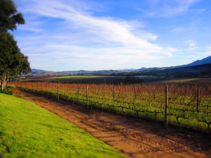 The Stellenbosch Valley as seen from Haskell Vineyards and Dombeya Wines