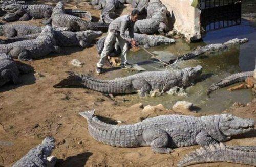 dinfo.gr - 30 φωτογραφίες που εξηγούν γιατί οι άντρες πεθαίνουν νωρίτερα από τις γυναίκες