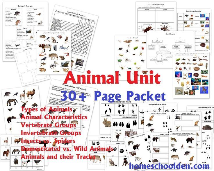 Animal Unit Vertebrate Invertebrate Groups Worksheet