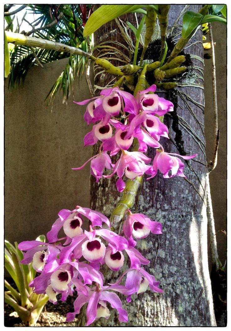 In The Garden, Van; In My Garden, orchids....
