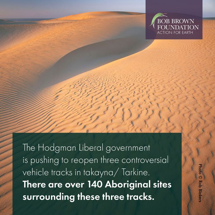 The Hodgman government's plan to open off-road vehicle tracks on the remote takayna / Tarkine coast between Sandy Cape and Pieman Heads is against the wishes of a majority of Tasmanians and the Tasmanian Aboriginal Centre. #actionforearth #bobbrown #bobbrownfoundation #environment #tasmania #australia #aussie #tassie #rainforest #bushland #wild #wilderness #wildlife #photography #forest #logging #politas #sustainable #tourism #ecoconscious #ethical #earth #discovertasmania #brandtasmania…