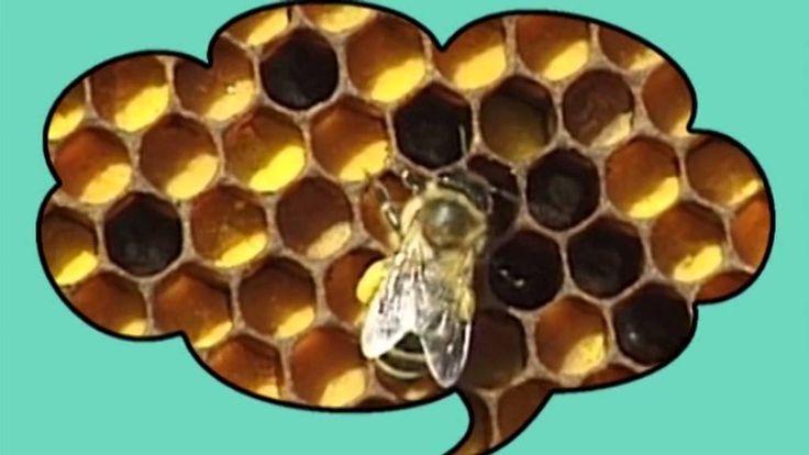 O včelách a medu