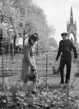 A woman waters the vegetables on her allotment in Kensington Gardens, 1942