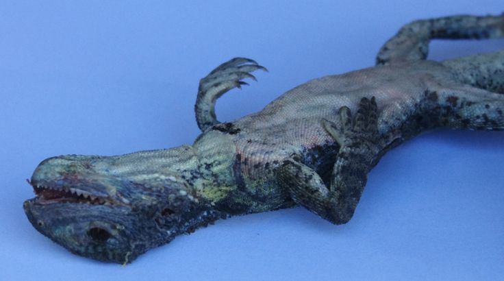 I found this miniature Tyrannosaurus Rex in my garden! Who said the age of dinosaurs was over?