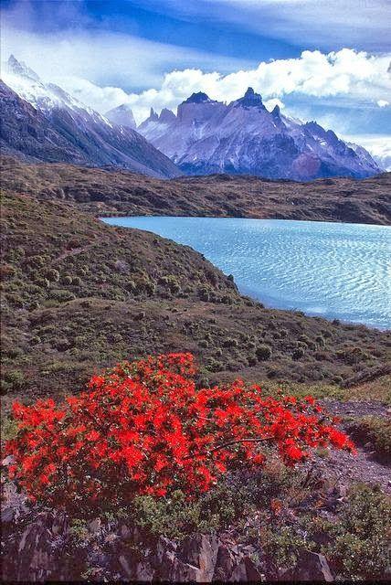 Tierra del Fuego, Lago Grey, Chile