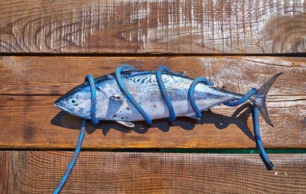 تفسير حلم رؤية سمك التونة في المنام سمك التونة من أفضل أنواع السمك التي ي فضلها الكثير ويحتوي على العديد من العناصر الغذائية التي Tuna Brands Tuna Kraft Heinz