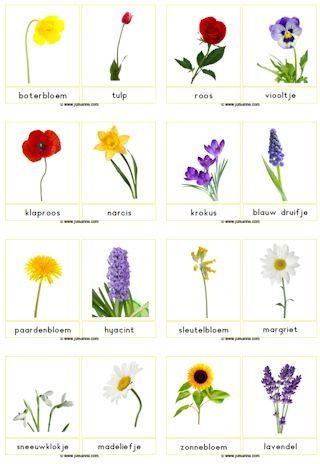 Bloemenkaarten voor het stempelen of klappen van de bloemen namen.