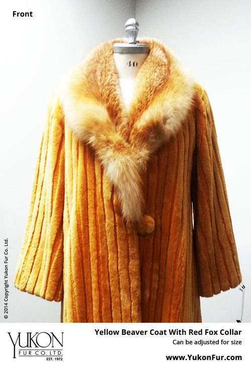 Yellow Beaver Coat With Red Fox Collar  $11,580.00  Size: 12 Lining: Silk  Can be adjusted for size  http://www.yukonfur.com/wp/product/2016-yellow-beaver-coat-with-red-fox-collar  For details call +01.416.598.3501 or email Chris, chris@yukonfur.com