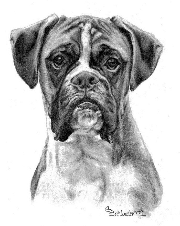 The Boxer ~ Pet Portraits by Genevieve Schlueter