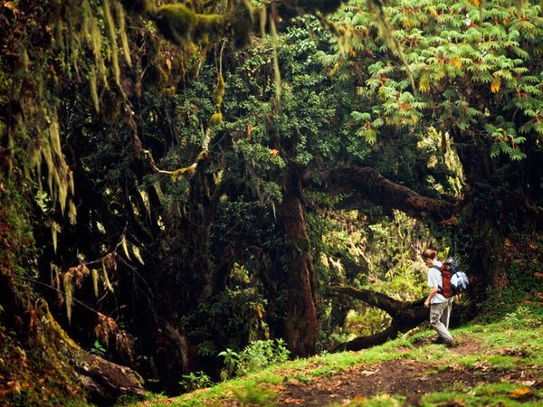 Mount Meru Forest, Tanzania