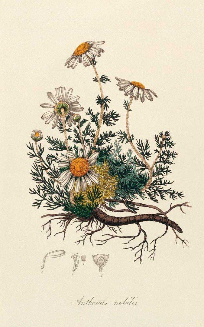 Цветы, открытки ботаника