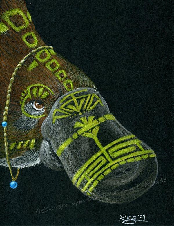 103 Best Images About Platypus On Pinterest