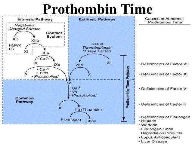 partial thromboplastin time vs prothrombin time