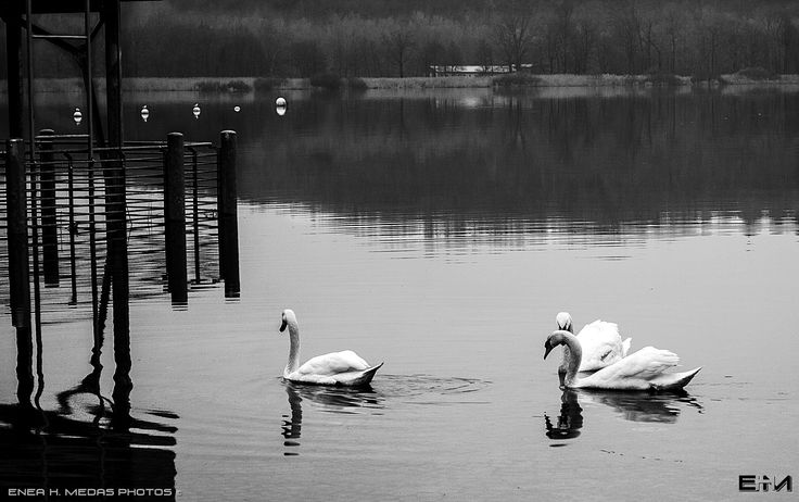 Lake and Duck - null