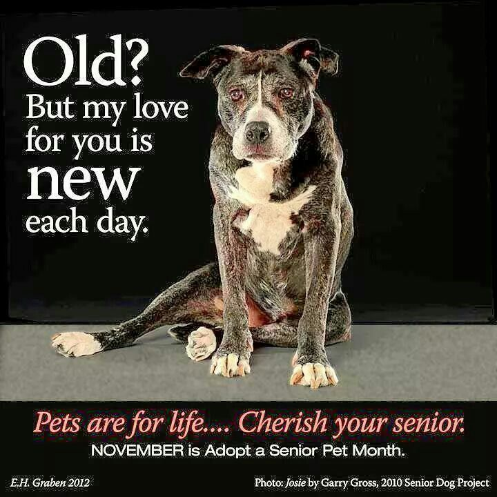 1000+ Old Dog Quotes On Pinterest