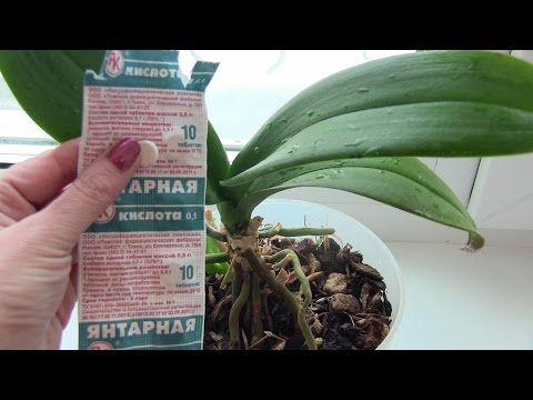Подкормка для буйного роста и цветения комнатных растений - YouTube