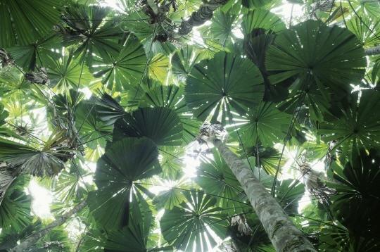Forêt tropicale du Queensland, Australie