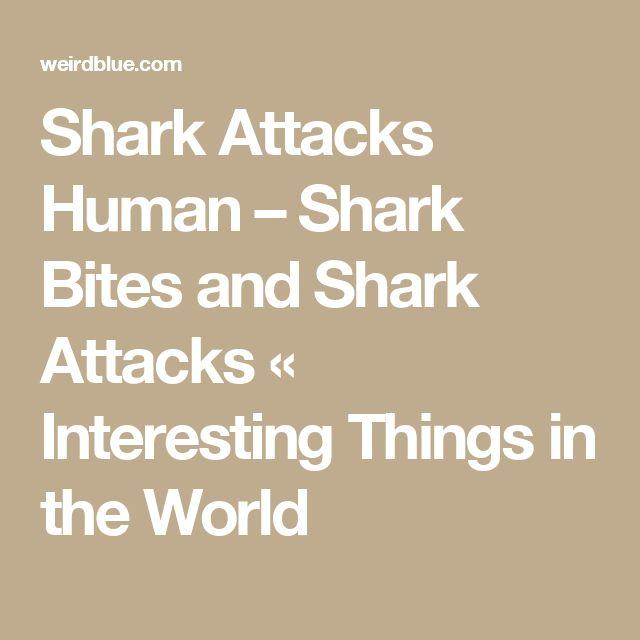 Shark Attacks Human – Shark Bites and Shark Attacks « Interesting Things in the World