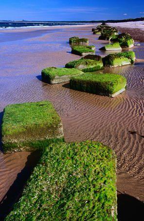 Findhorn beach, Scotland Blocks of moss on Findhorn beach in the Scottish Highlands