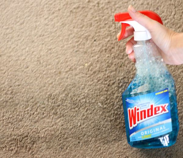 Windex to remove carpet stains...who knew?! But it works like a charm!!!!!!