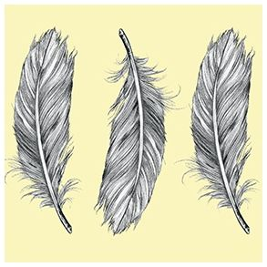 Feathers by dims - Full Coverage. Price 7,1 € Fjer by Dims - Heldækkende folie. Pris 49 dkk.